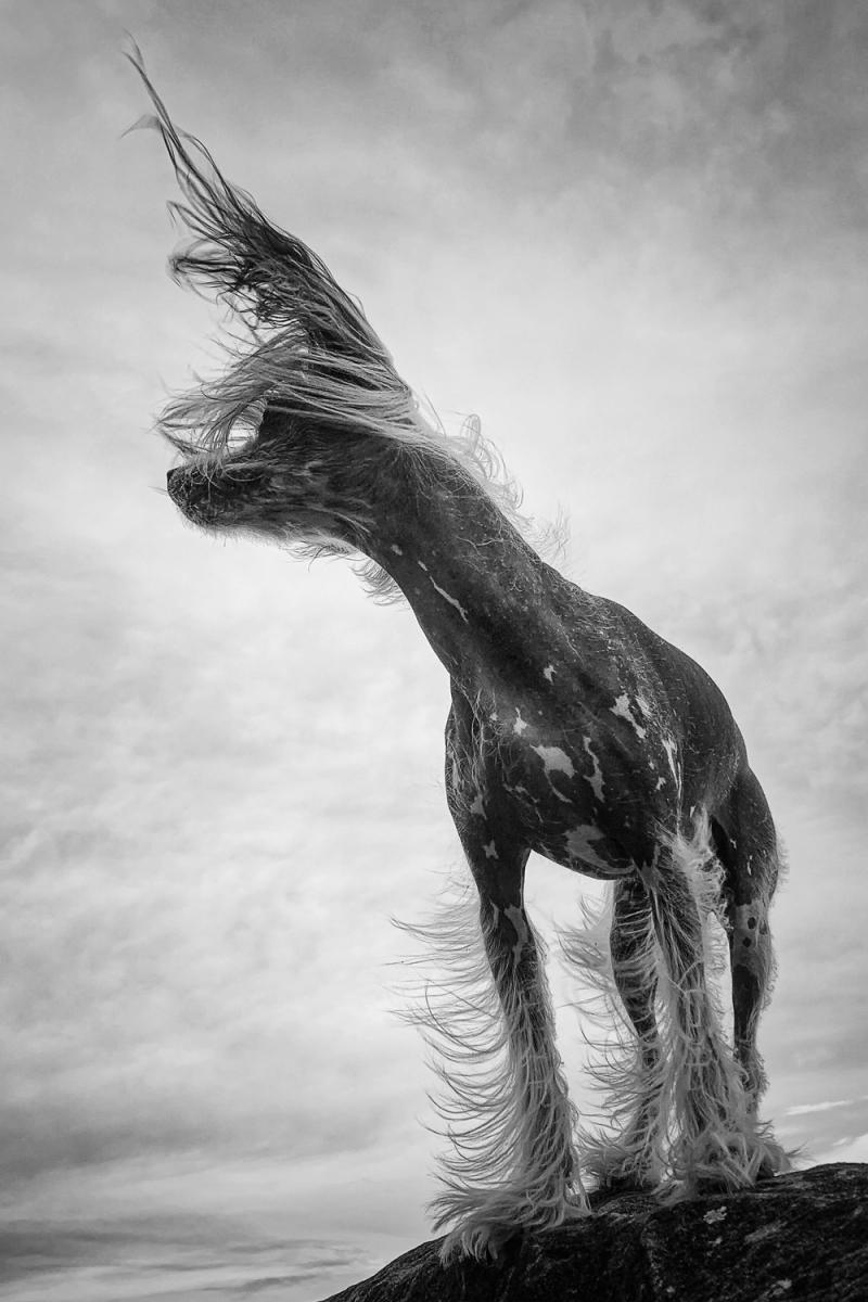 2021-Winning-Photographers-IPPAWARDS-iPhone-Photography-Awards-9